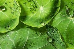 春天绿色满地露水的叶子 库存照片
