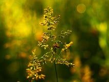 春天绿色 库存照片