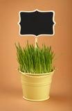 春天绿草与签到在褐色的桶 图库摄影