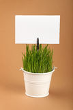 春天绿草和签到在褐色的桶 库存照片