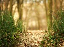 春天绿草摘要森林背景 免版税图库摄影