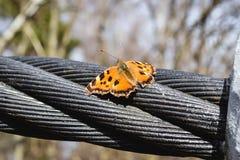 春天蝴蝶 库存图片