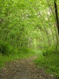 春天 路径在森林 库存照片
