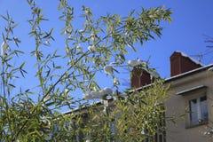 春天 雪在绿色叶子熔化 库存照片