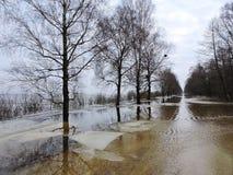 春天洪水,立陶宛 库存图片