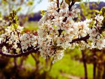 春天 库存照片