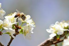 春天! 免版税库存图片