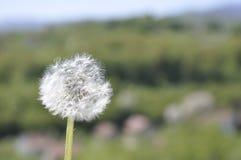 春天blosom 库存照片