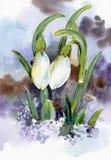 春天snowdrop开花与雪在森林里 免版税库存图片