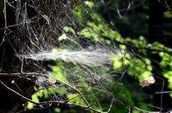 春天spiderweb 库存照片