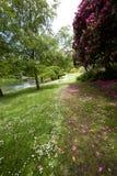 春季的英国庭院 库存图片