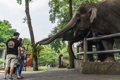 春武里市,泰国- 2017 9月30日,未认出的旅游fam 免版税库存照片