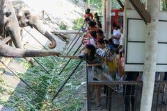 春武里市/泰国- 2018年4月15日:哺养对大象` s树干的青年人在Khao Kheow开放动物园里 图库摄影