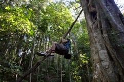 春溪国家公园-昆士兰澳大利亚 免版税库存图片