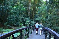 春溪国家公园-昆士兰澳大利亚 免版税图库摄影