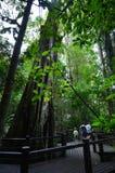 春溪国家公园-昆士兰澳大利亚 免版税库存照片