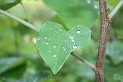 春雨被留下的  免版税图库摄影