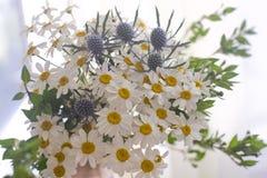 春黄菊和刺芹属植物花束  图库摄影