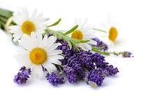 春黄菊和淡紫色花在白色背景 免版税库存照片