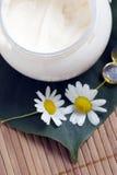 春黄菊奶油色表面 库存照片