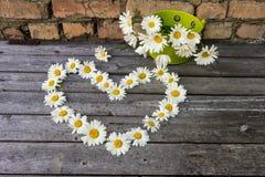 春黄菊心脏和花束开花木表面上 图库摄影