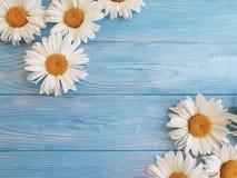 春黄菊生气勃勃装饰在蓝色木背景样式问候的葡萄酒设计 免版税图库摄影