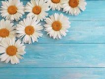 春黄菊生气勃勃装饰葡萄酒在蓝色木背景样式问候的装饰品设计 库存照片