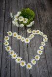 春黄菊花心脏和花束  库存图片