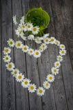 春黄菊花心脏和花束  图库摄影