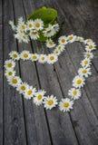 春黄菊花心脏和花束  免版税库存照片