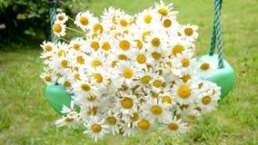 春黄菊花束在摇摆说谎 影视素材