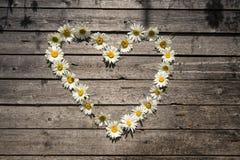 春黄菊花的心脏 免版税库存照片