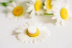春黄菊花,同种疗法药物 在黄色花粉的白色片剂 免版税库存照片