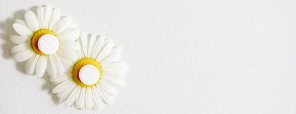 春黄菊花,同种疗法药物 在黄色花粉的白色片剂 库存照片