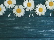 春黄菊黑暗的木背景花卉葡萄酒装饰品欢乐设计观念构成 库存图片