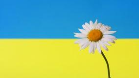 春黄菊乌克兰语 库存例证