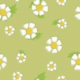 春黄菊传染媒介背景  无缝的模式 免版税库存照片