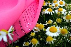 春黄菊和桃红色布料 库存图片