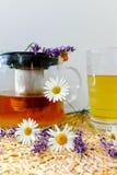 春黄菊和淡紫色清凉茶 免版税库存照片