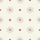 春黄菊和瓢虫无缝的样式 免版税图库摄影