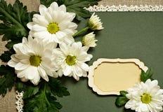 春黄菊安排和卡片 图库摄影