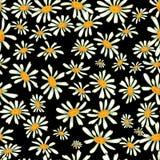 春黄菊无缝的样式 免版税库存照片