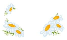 春黄菊框架 皇族释放例证
