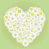 春黄菊的心脏 图库摄影