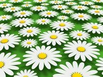 春黄菊背景 库存图片