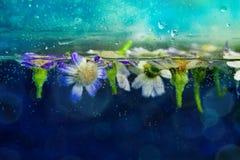 春黄菊花在与泡影的水中 免版税库存照片