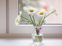 春黄菊花束在窗口基石开花 库存图片