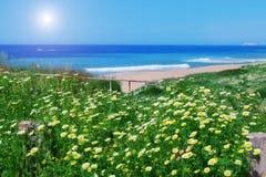 春黄菊领域和草在海的背景。 免版税图库摄影