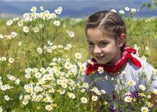 春黄菊领域的女孩 图库摄影