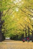 昭和纪念公园 库存照片